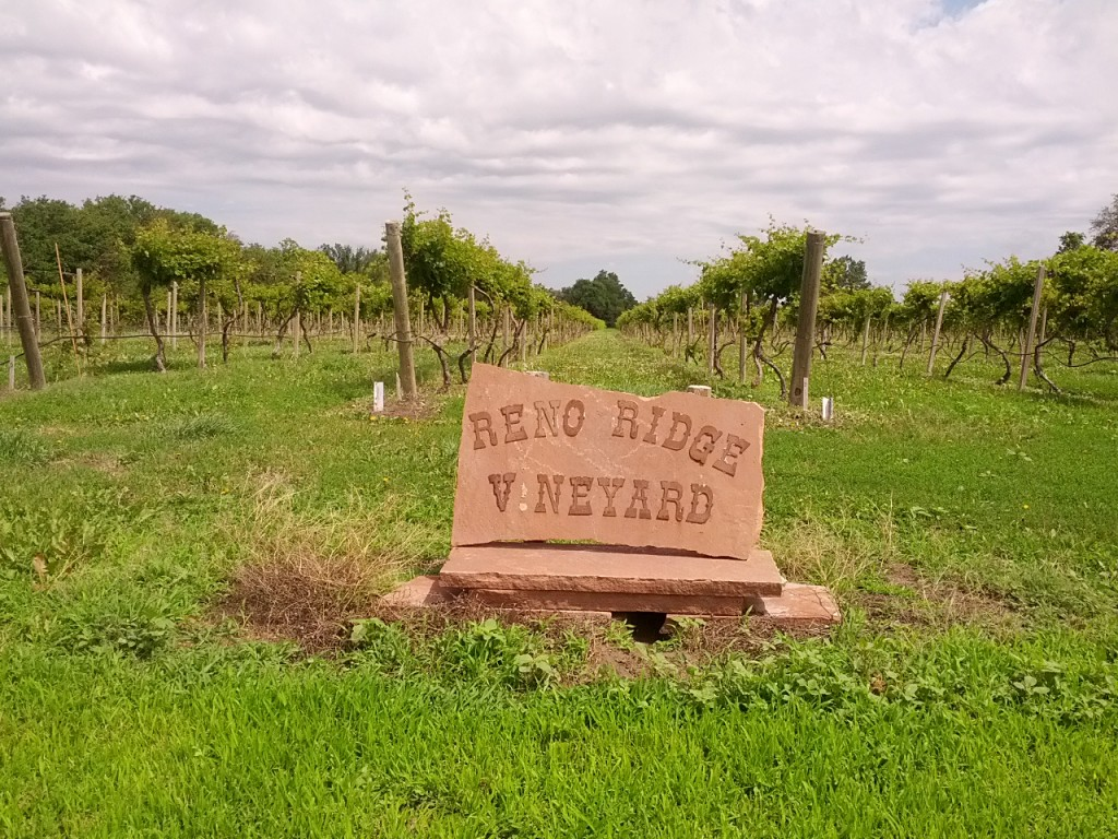 I was quite excited to find this vineyard until I discovered there was no adjacent winery